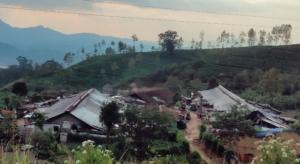 Czworaki Line Houses