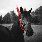 Koniu, Giertych